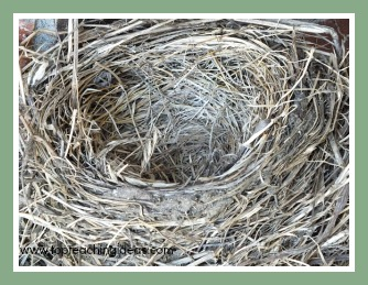 birds-nest-birds-theme